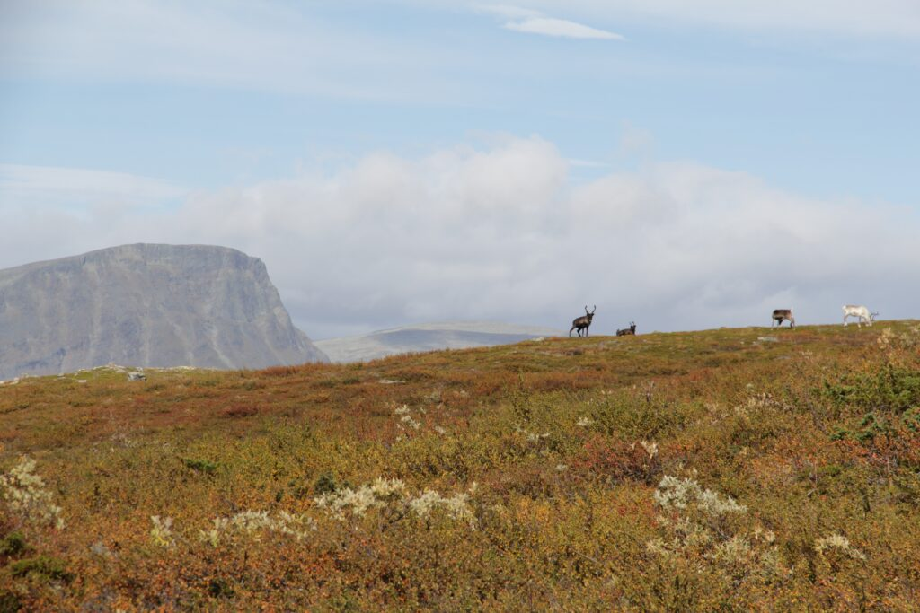 Trail Running Tarnaby